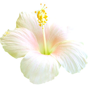 NLD PF Flower.png - PNG Single Flower