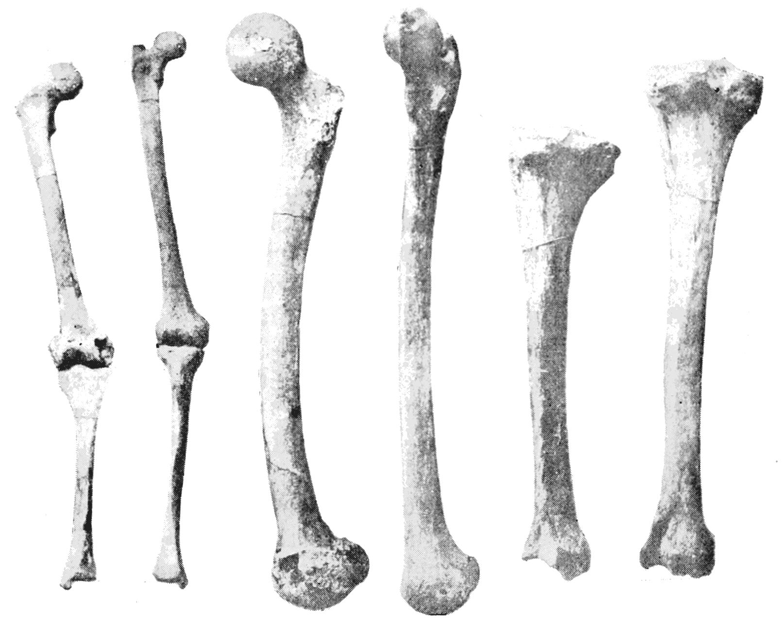 PNG Skeleton Bones - 87162