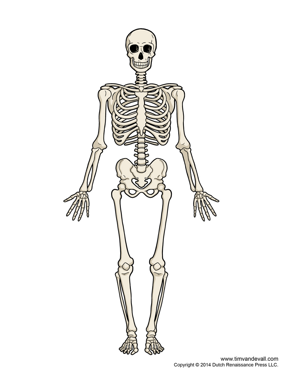 PNG Skeleton Bones - 87164