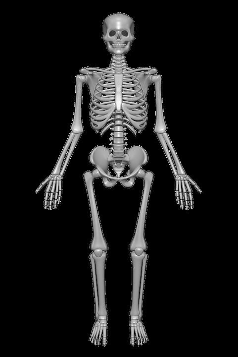PNG Skeleton Bones - 87154