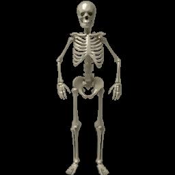 PNG Skeleton Bones - 87158