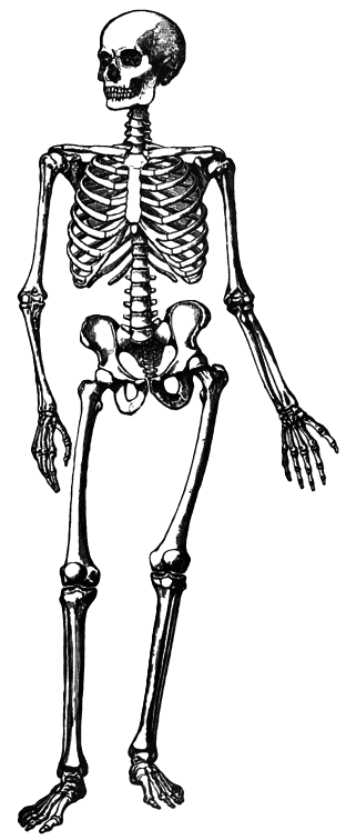 PNG Skeleton Bones Transparent Skeleton Bones.PNG Images ... Broom Clipart Black And White