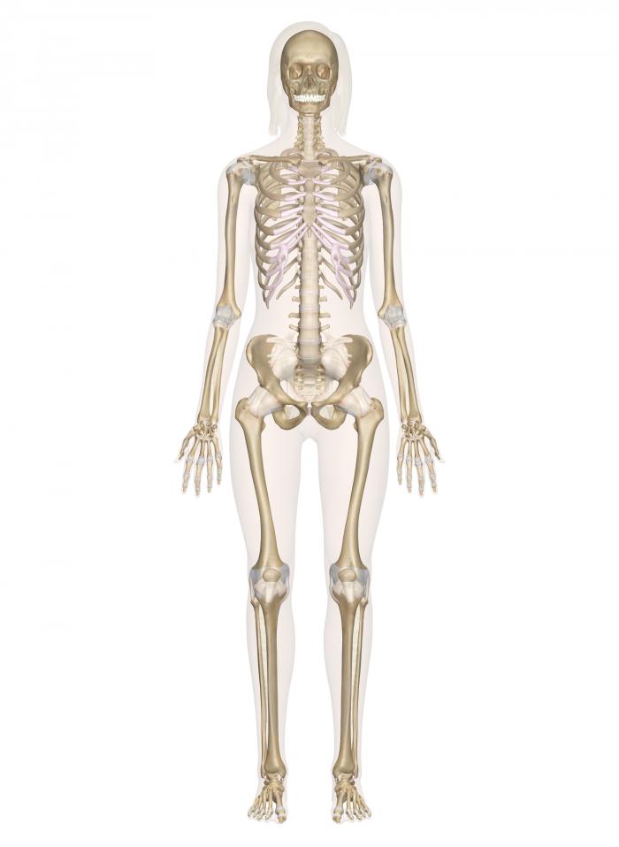 PNG Skeleton Bones - 87163