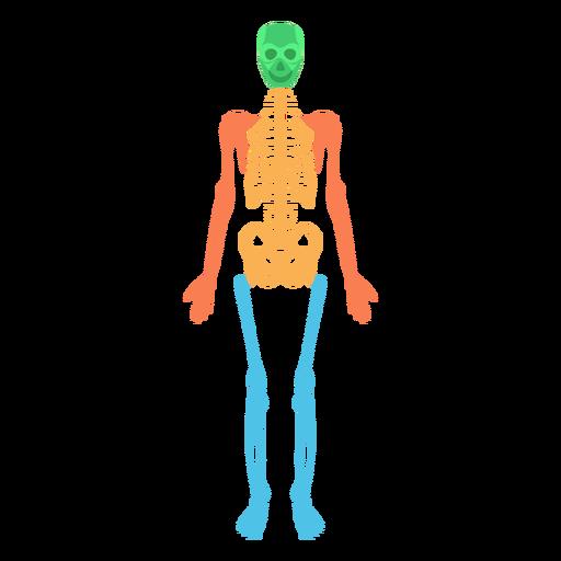 PNG Skeleton Bones - 87165