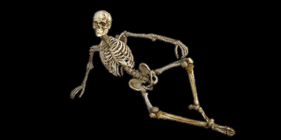 PNG Skeleton Bones - 87159