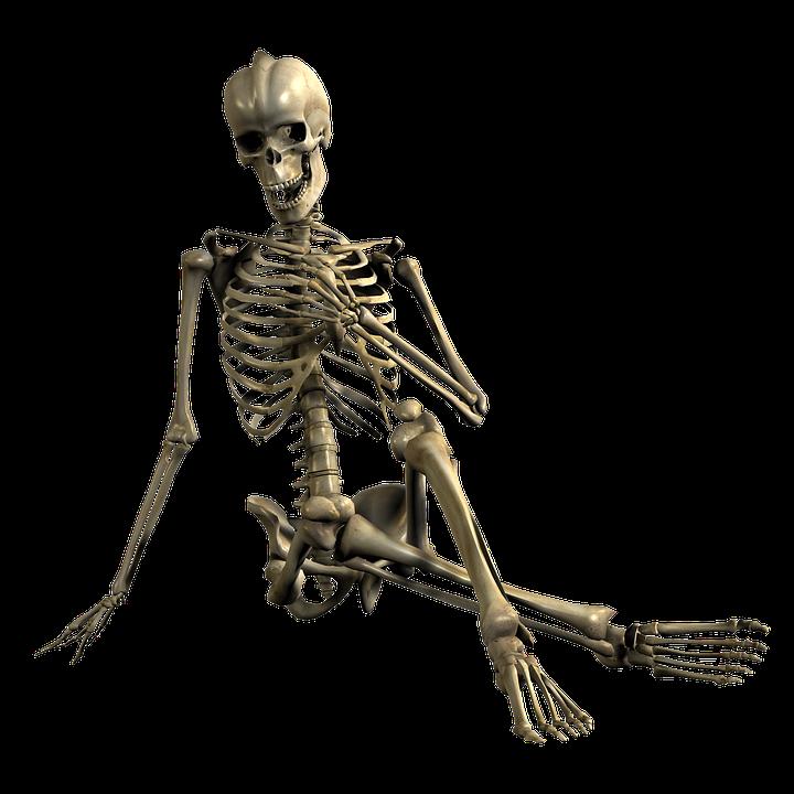 PNG Skeleton Bones - 87156