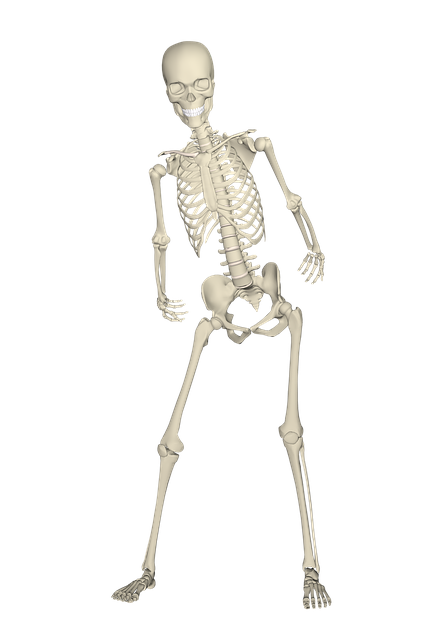 PNG Skeleton Bones - 87160
