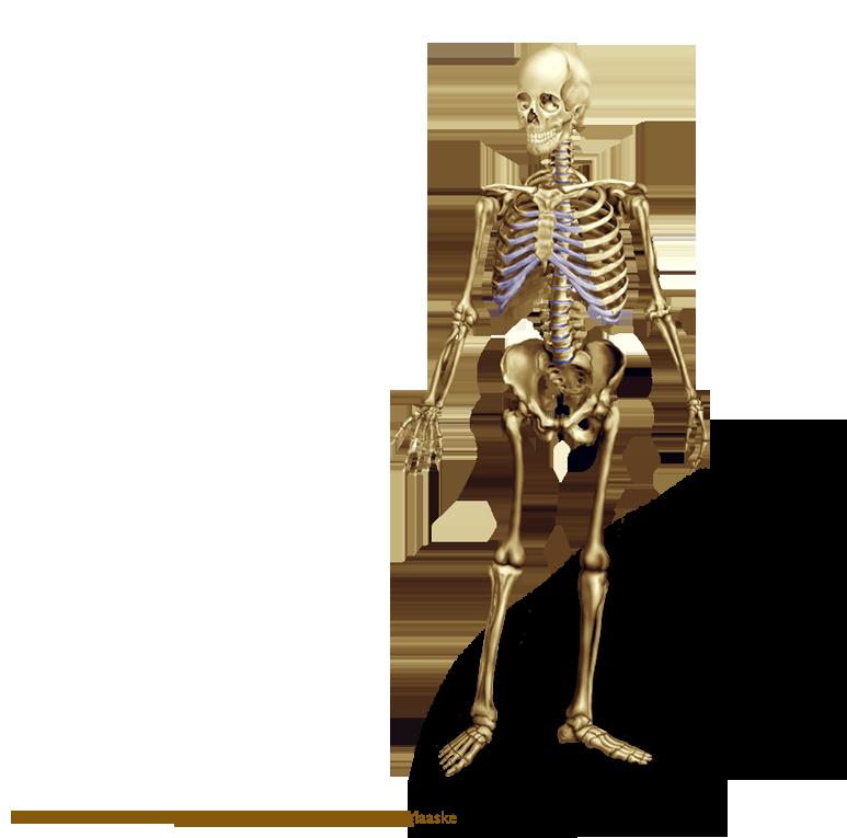 PNG Skeleton Bones - 87152