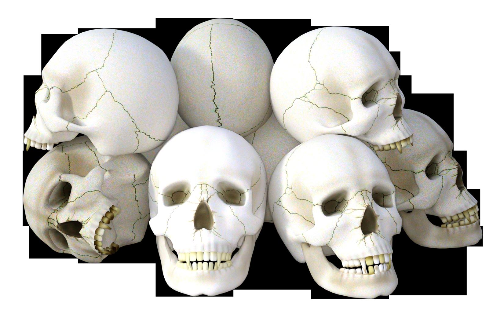 PNG Skeleton Head-PlusPNG.com-1650 - PNG Skeleton Head