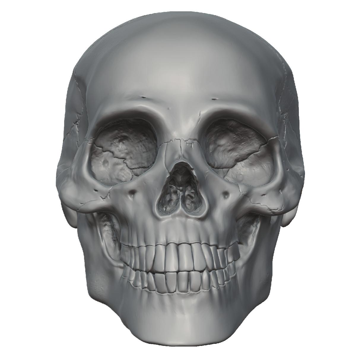Download PNG image - Skeleton Head Free Png Image - PNG Skeleton Head