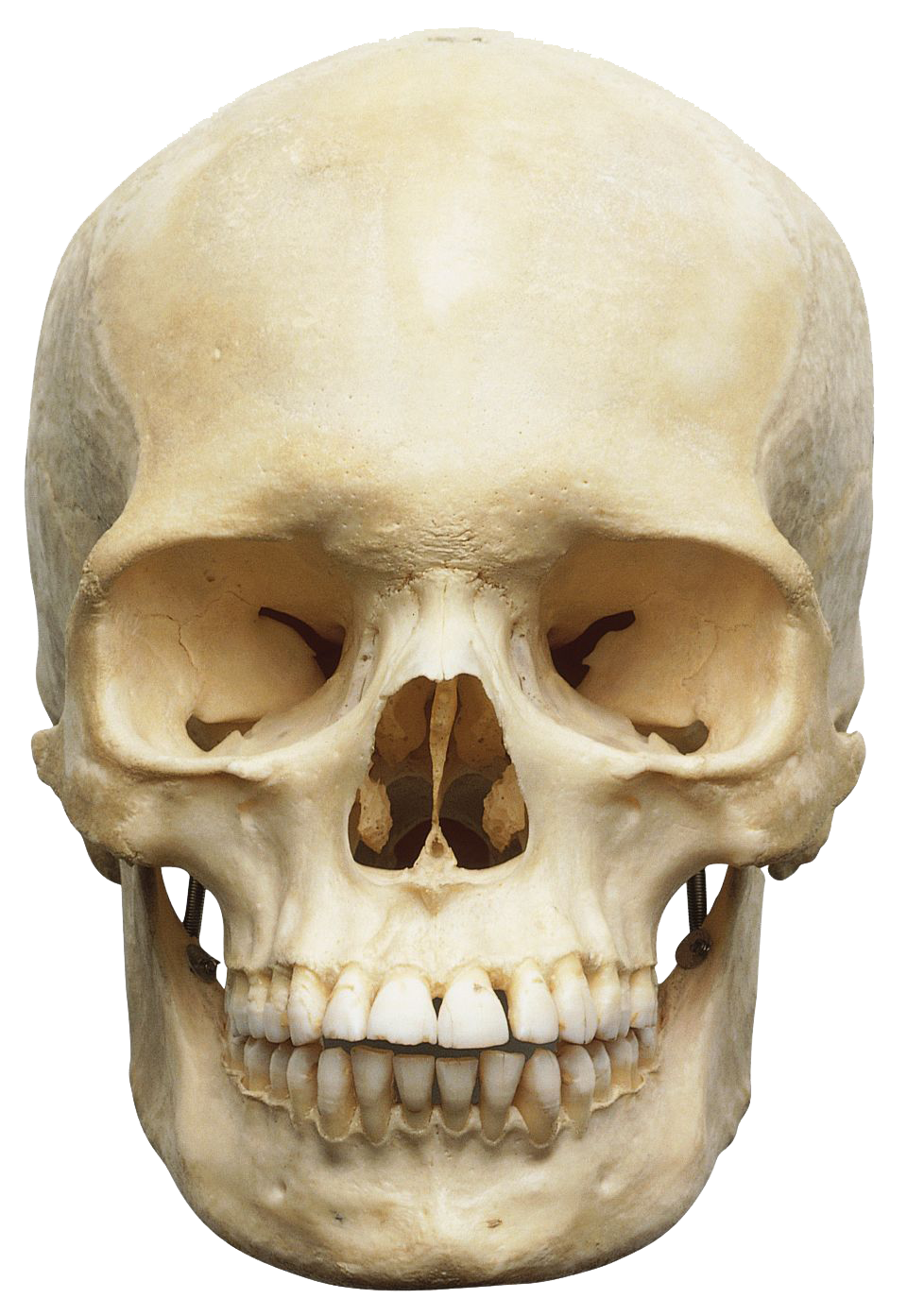 Download Skeleton Head PNG images transparent gallery. Advertisement - PNG Skeleton Head