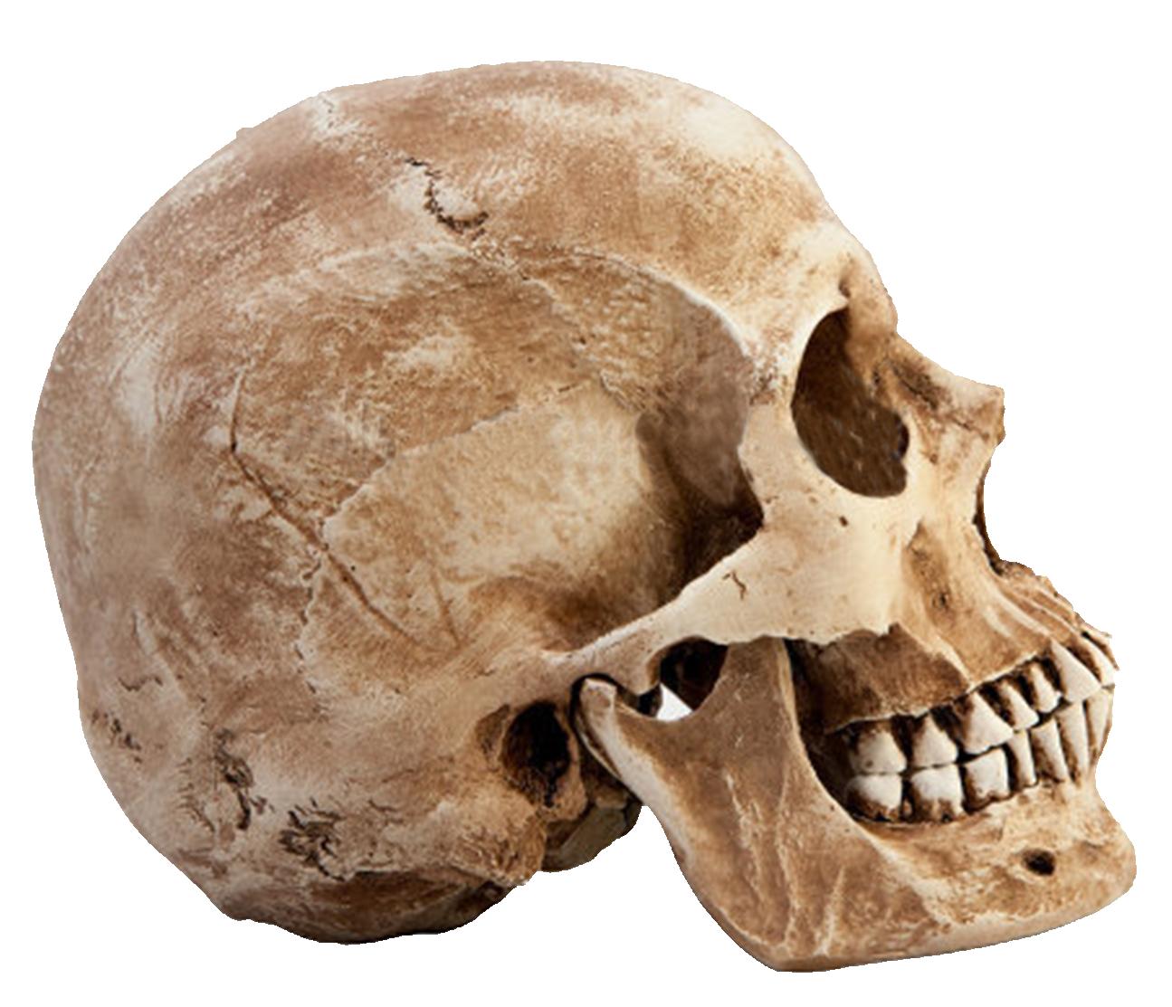 Download Skull PNG images transparent gallery. Advertisement - PNG Skeleton Head