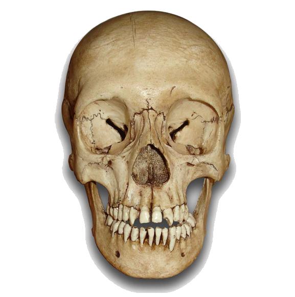 Similar Skeleton Head PNG Image - PNG Skeleton Head
