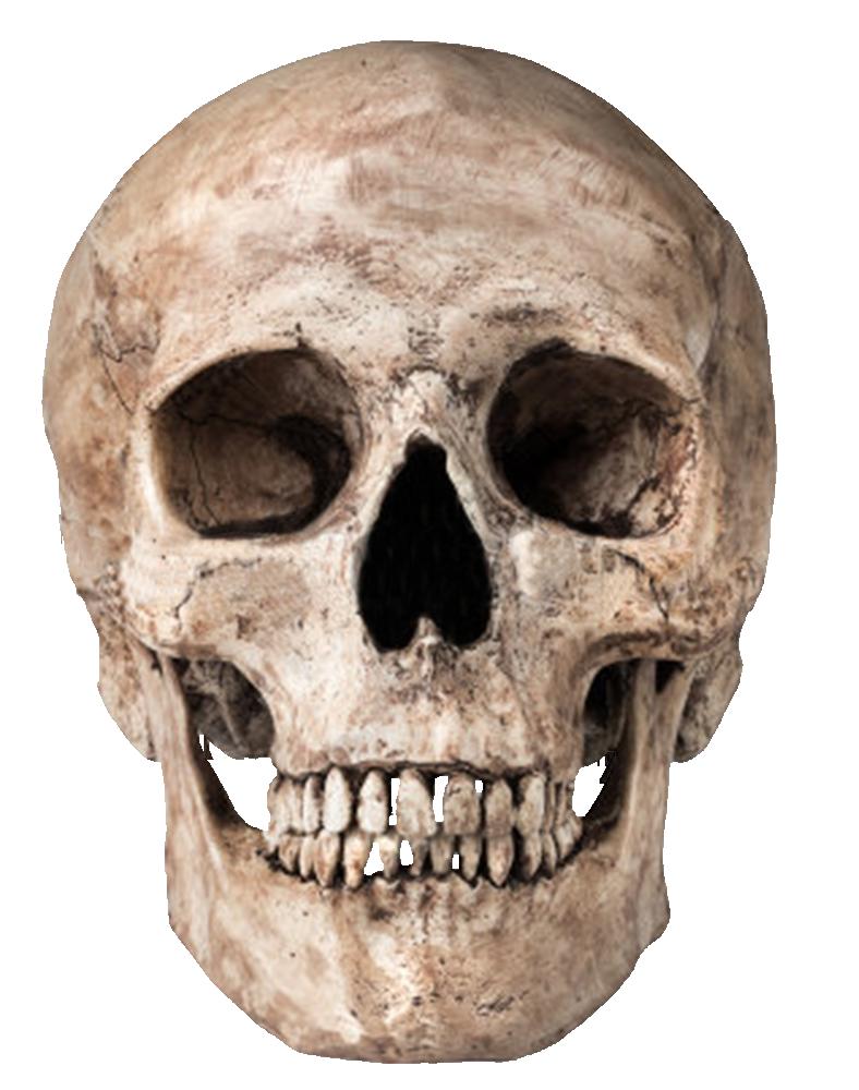Skull Png Image PNG Image - PNG Skeleton Head