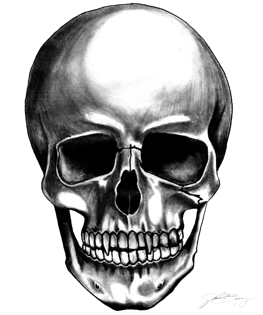 Skull Transparent Background - PNG Skeleton Head