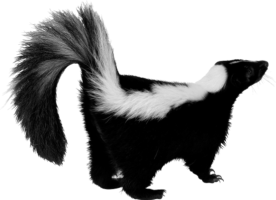 PNG Skunk
