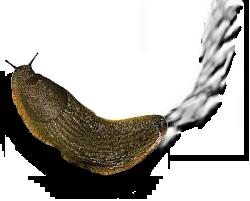 decorative slug graphic - PNG Slug