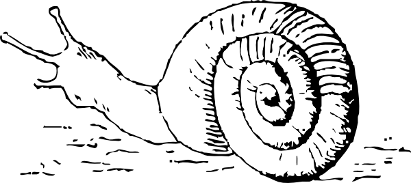 PNG: small · medium · large - PNG Snail Black And White