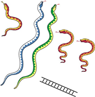 PNG Snakes And Ladders - 84412