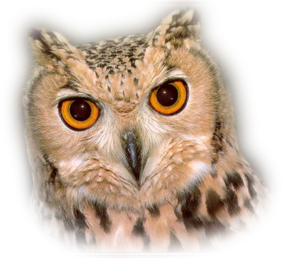 Ptaki: Sowa. png - PNG Sowa