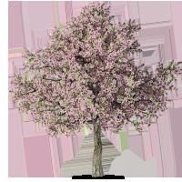 Fannin_TreeThriveTrees_Spring Spring Treatment - PNG Spring Tree
