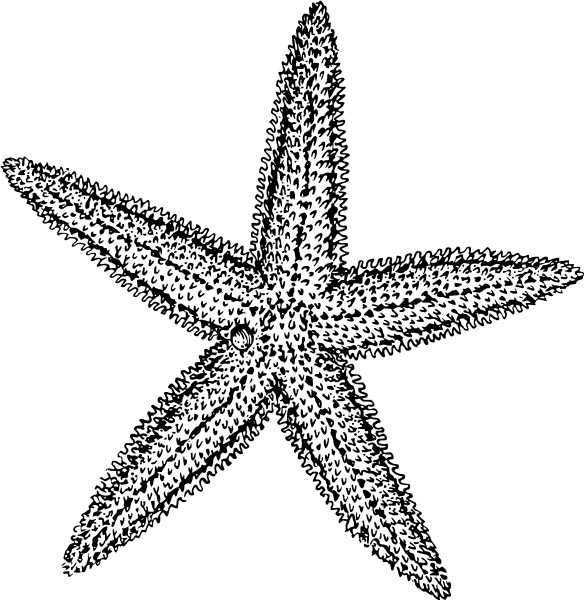 starfish black and white