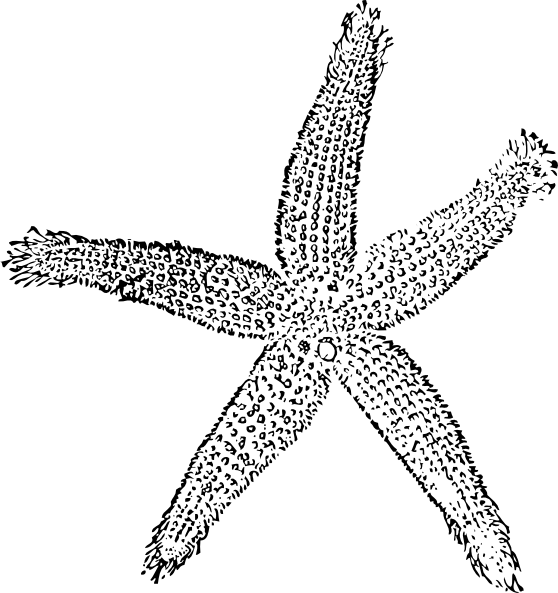 PNG Starfish Black And White - 59845