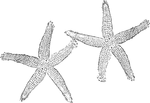 PNG: small · medium · large - PNG Starfish Black And White