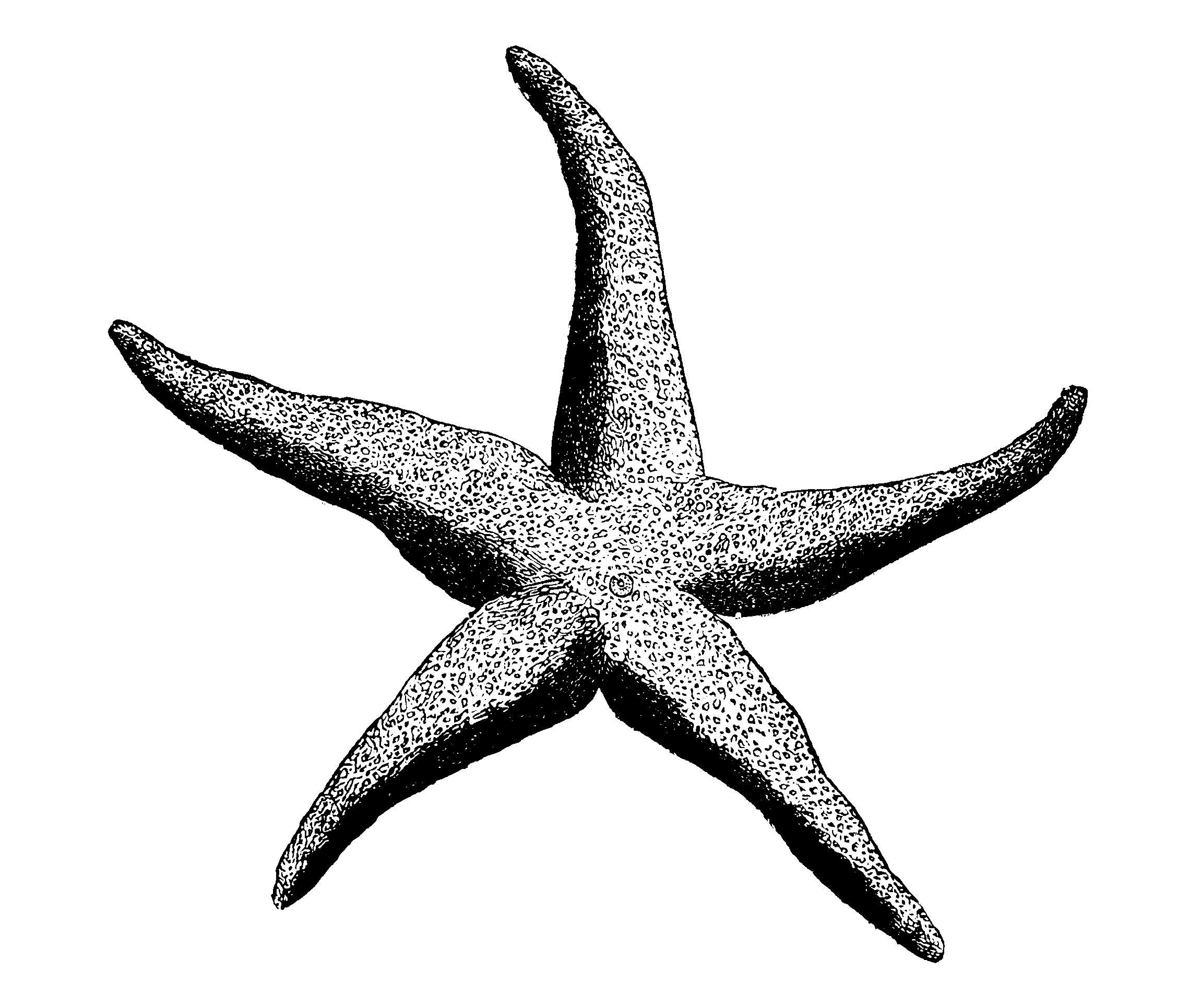 PNG Starfish Black And White - 59850