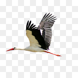 Flying storks, Stork Material, Flying Style, Bird Material PNG Image - PNG Stork