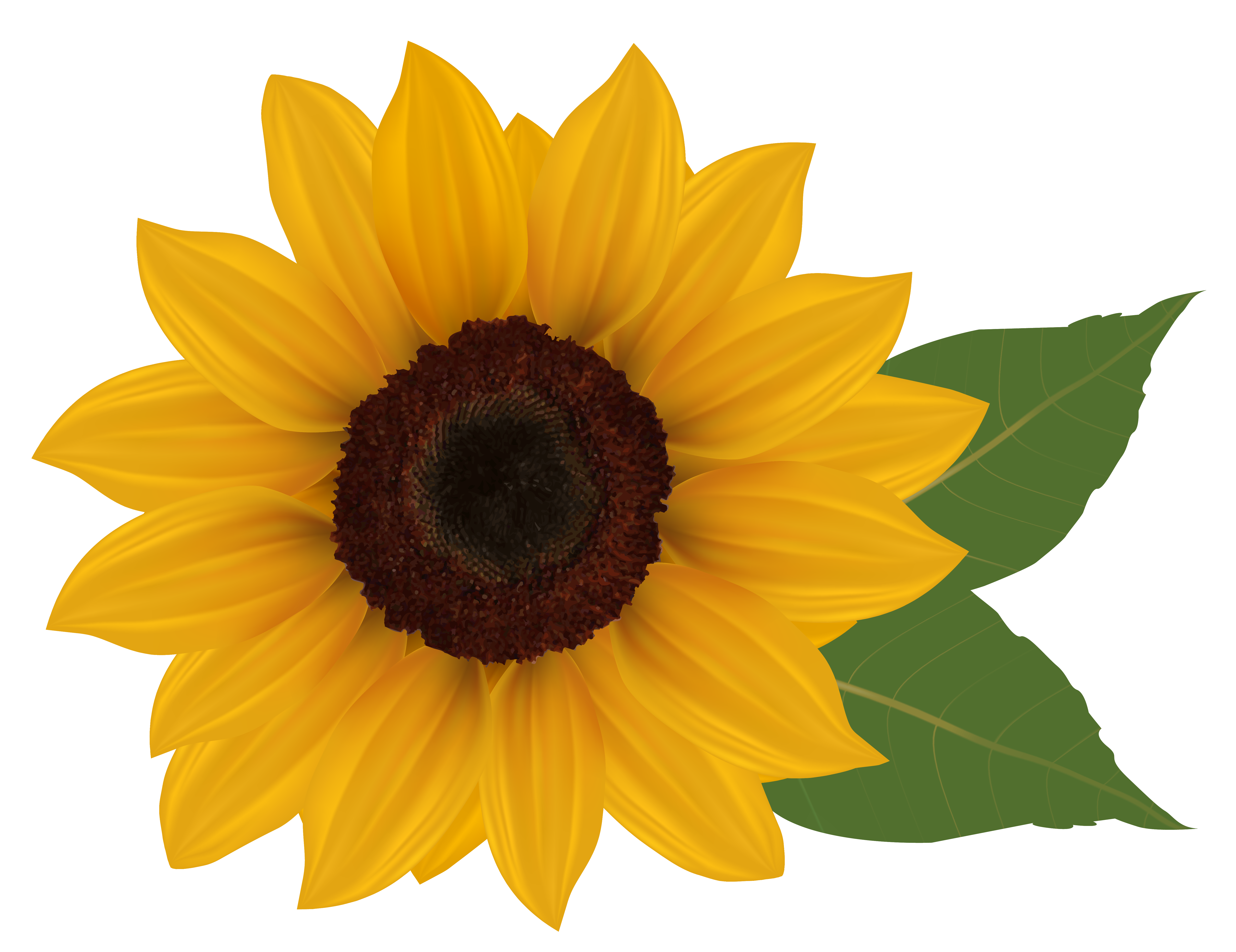 PNG Sunflower - 58134