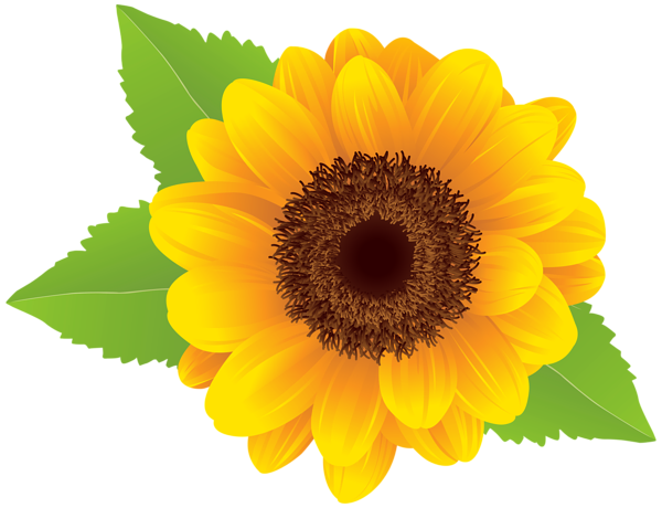 PNG Sunflower - 58133