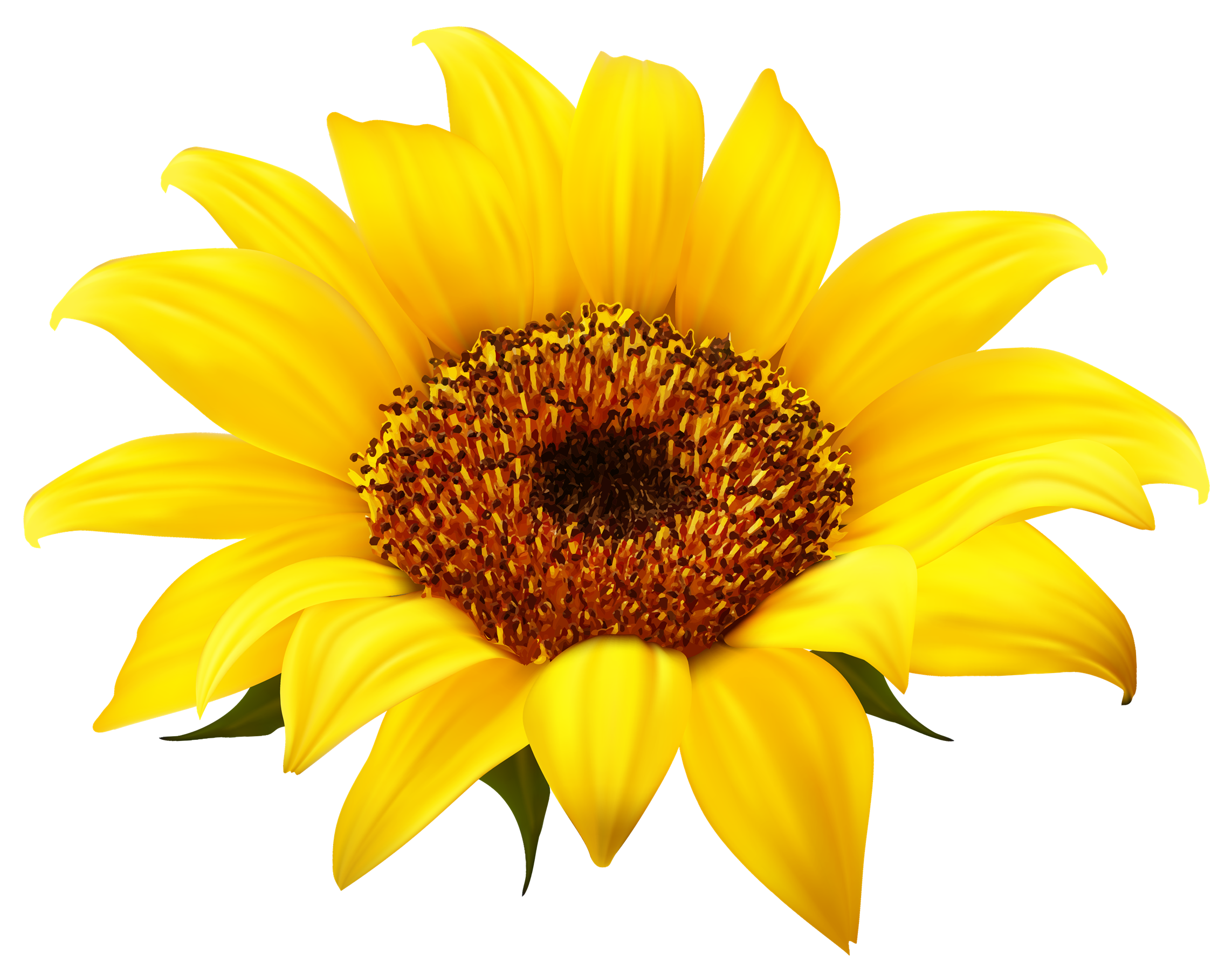 PNG Sunflower - 58127