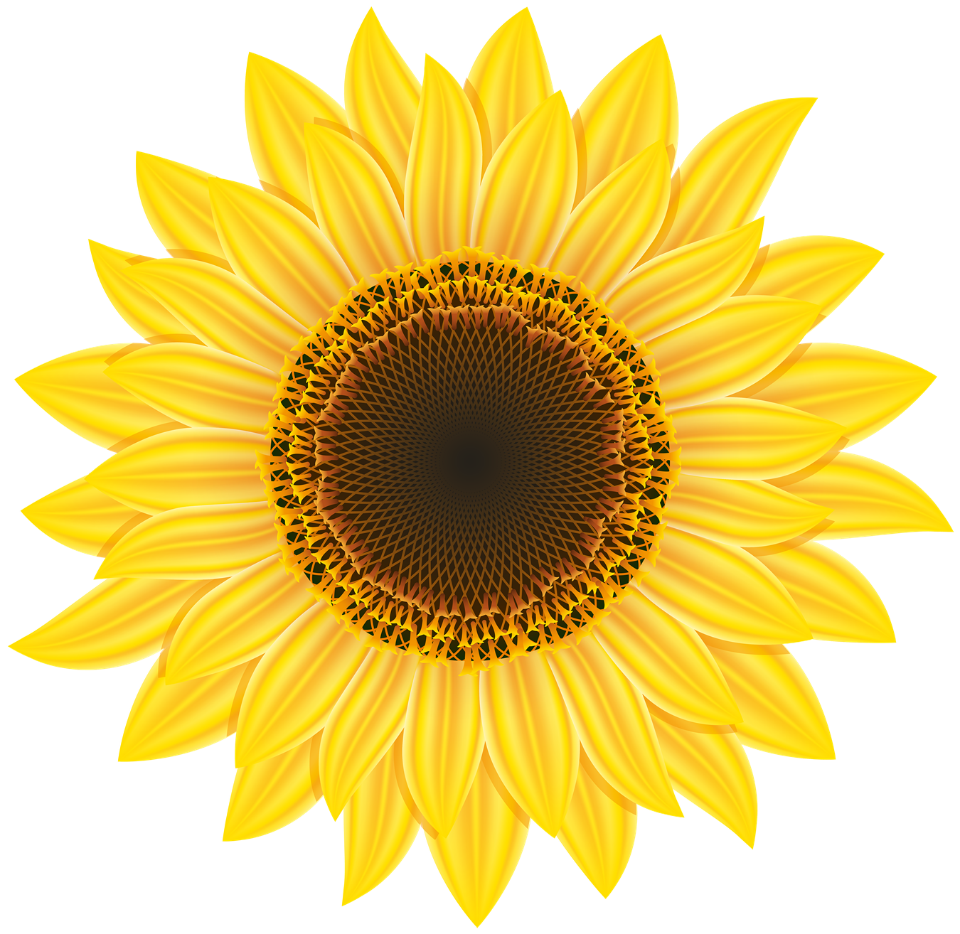 PNG Sunflower - 58129