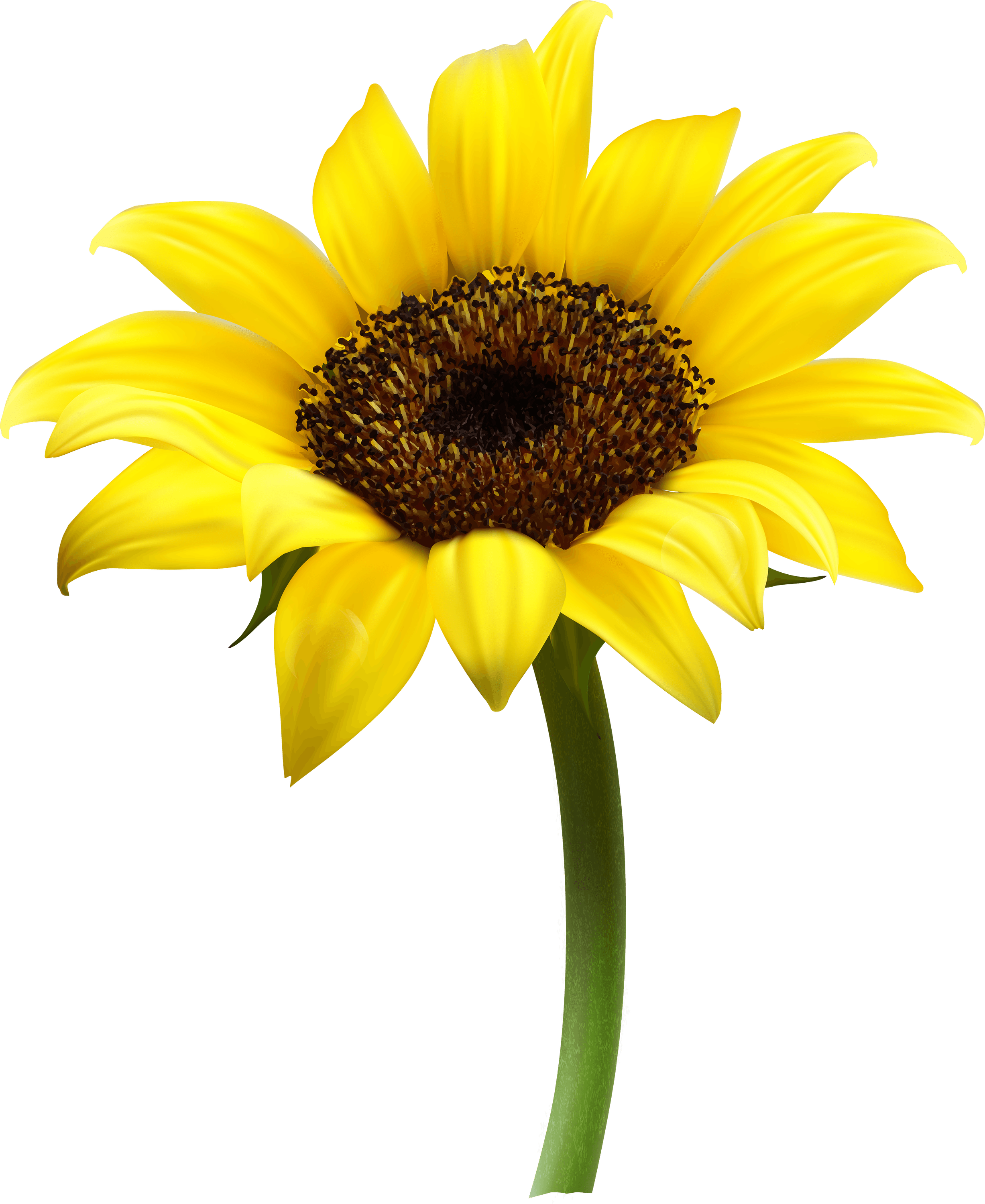 PNG Sunflower - 58125