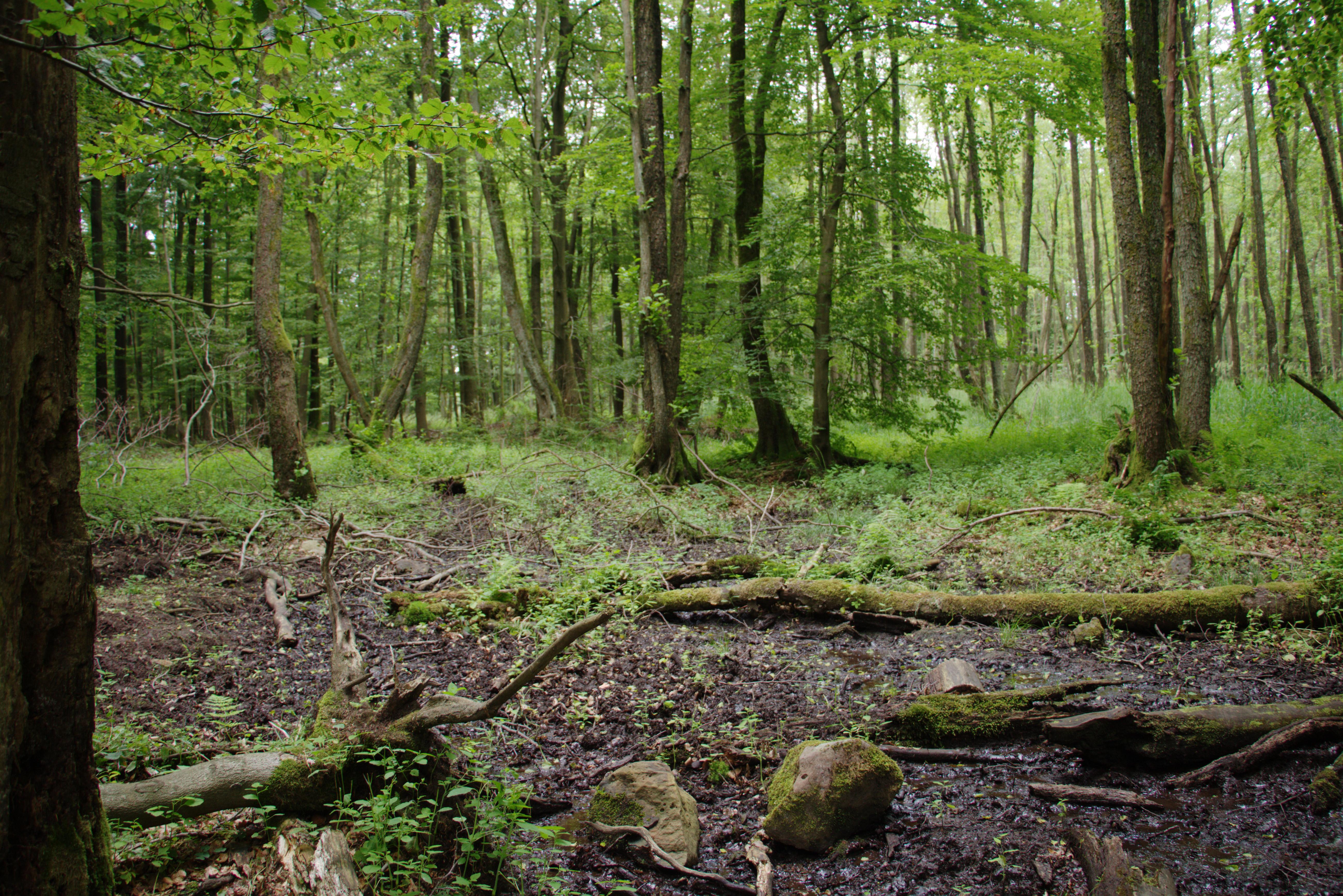 PNG Swamp - 57925