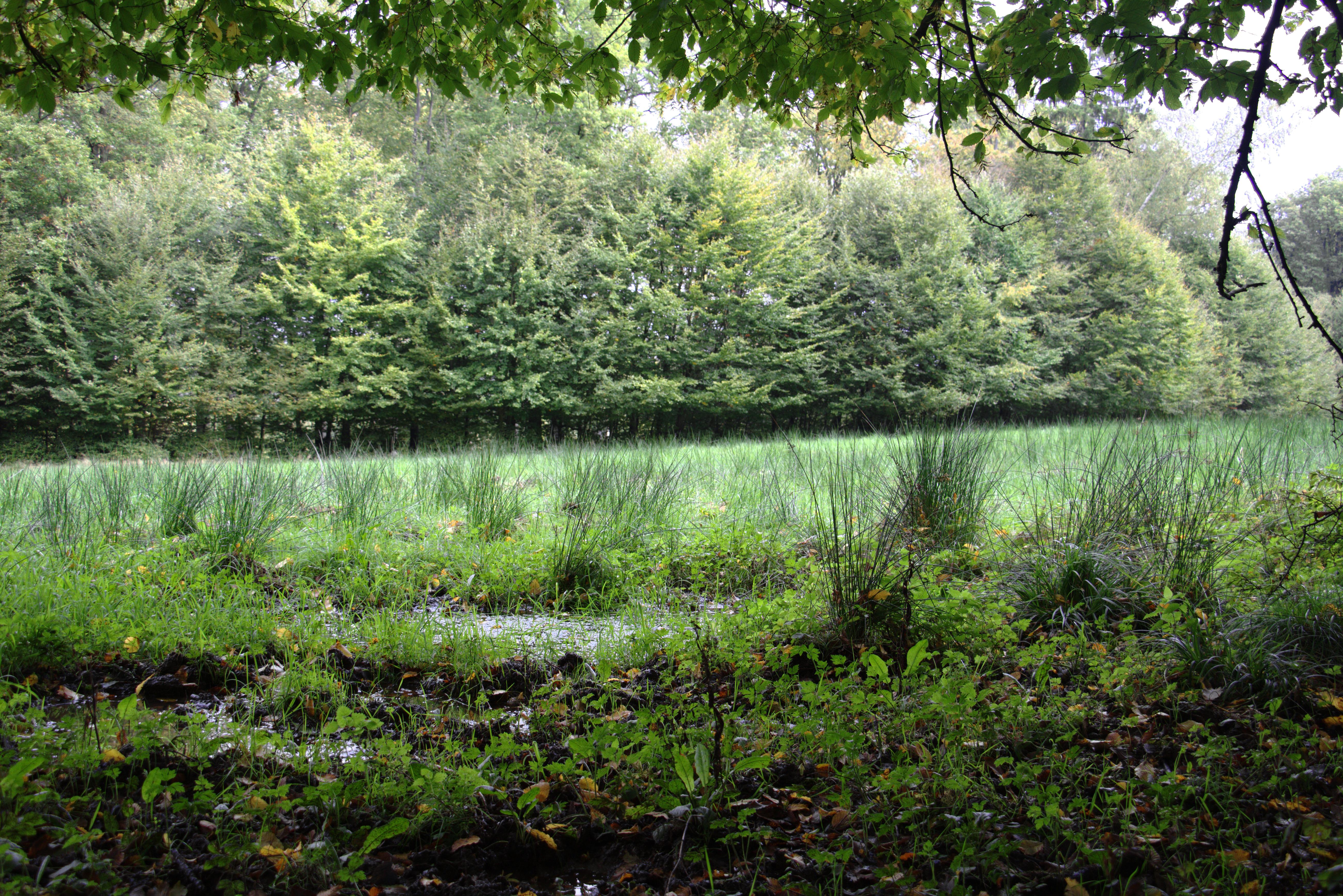 PNG Swamp - 57926
