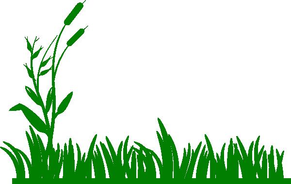 PNG Swamp - 57933