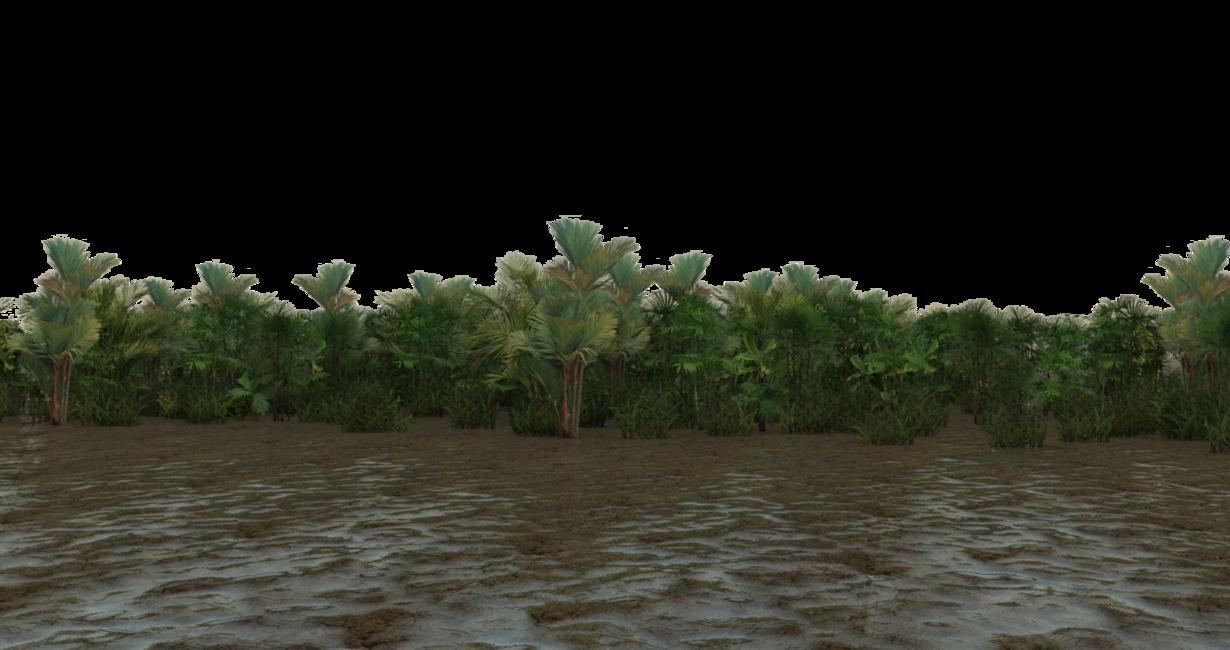 PNG Swamp - 57923