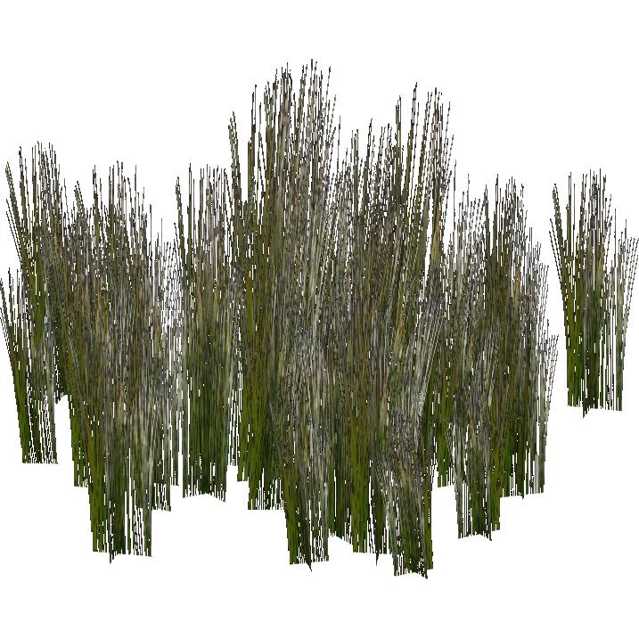 PNG Swamp - 57919