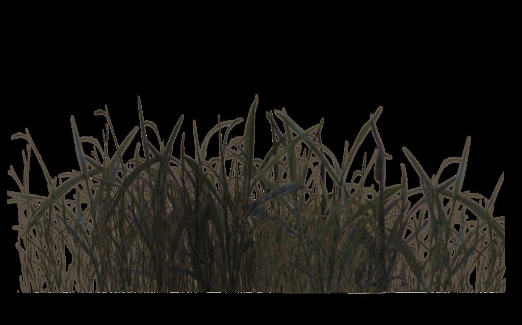 PNG Swamp - 57921