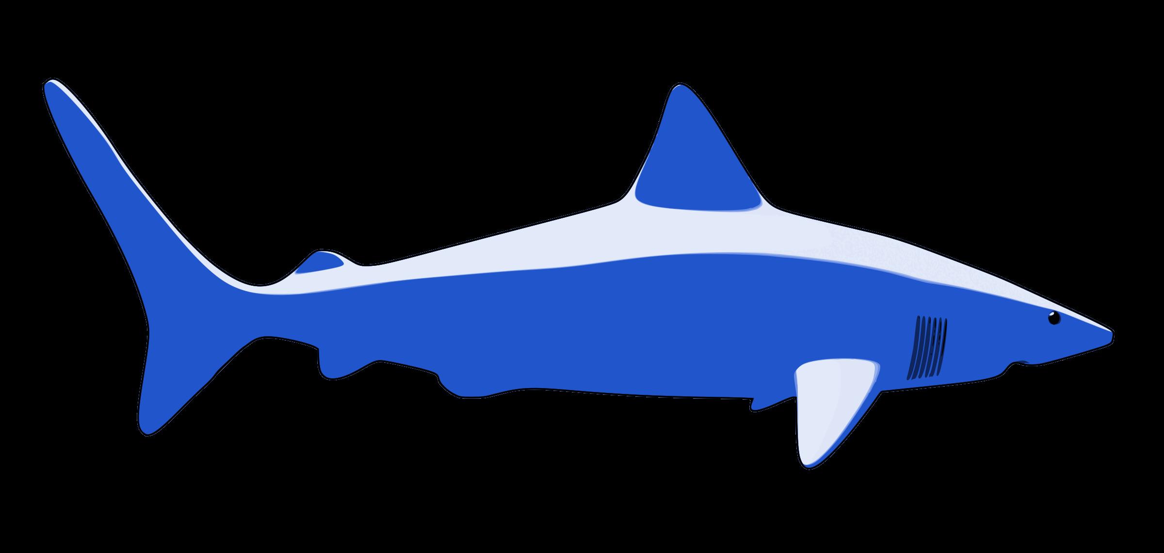 PNG Tiburon - 58868