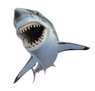 PNG Tiburon - 58867