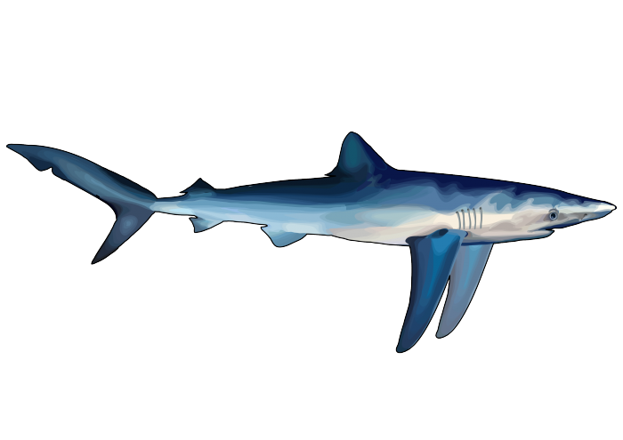 PNG Tiburon - 58862