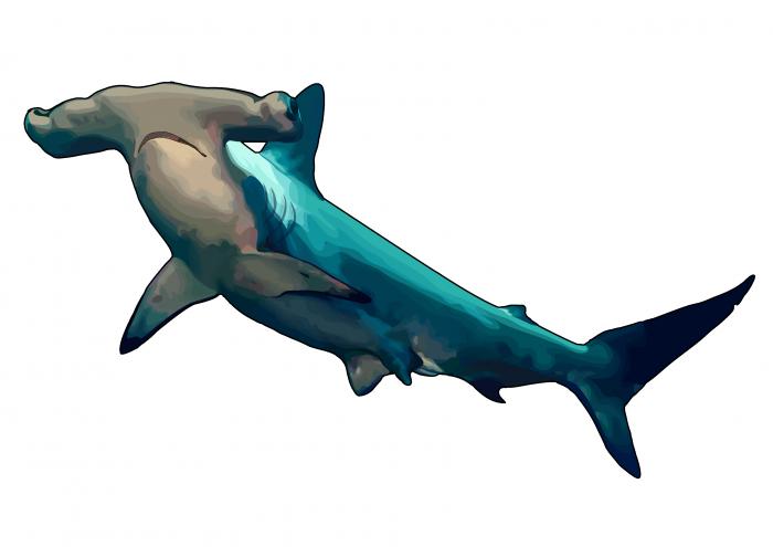PNG Tiburon - 58863