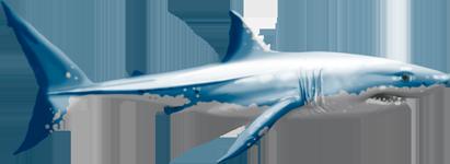 PNG Tiburon - 58871