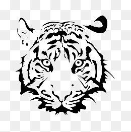 Painting tiger head, Steller,