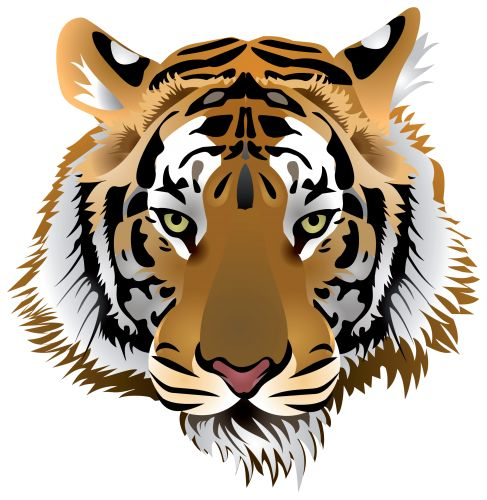 Tiger Head PNG Clip Art | Clipart animals | Pinterest | Clip art and Tigers - PNG Tiger Face