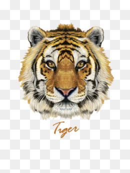 Tigeru0027s face, Child, Love