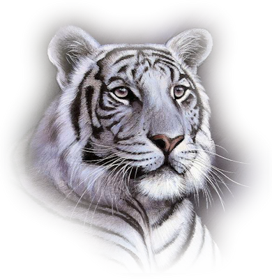 Wht-Tiger-Face.png - PNG Tiger Face